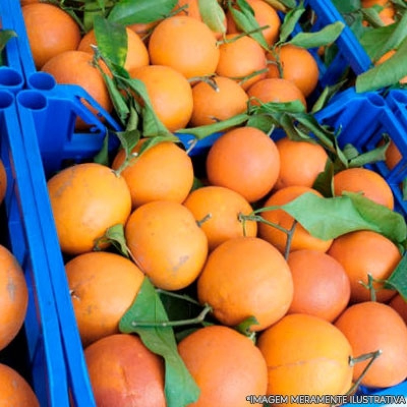 Fornecedor de Frutas Parque Maria Domitila - Fornecedor de Frutas
