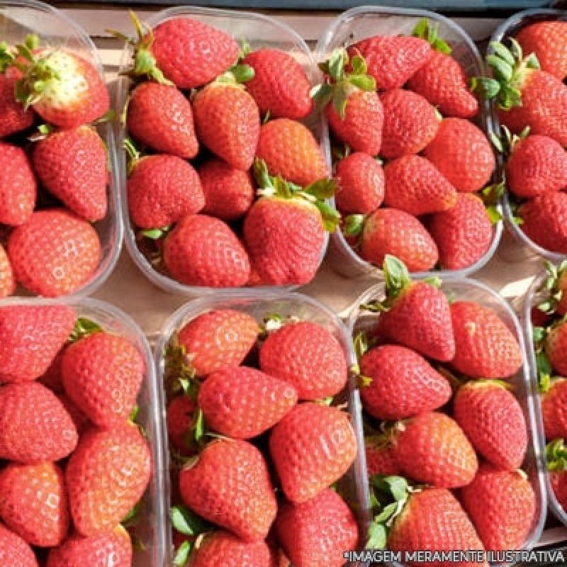 Onde Encontro Fornecedores de Frutas Frescas Chácara Inglesa - Fornecedores para Frutas