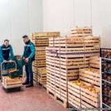 contato de fornecedor de frutas Perus
