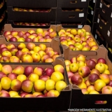 contato de fornecedor frutas Jaraguá