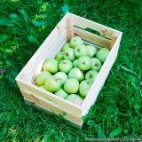 entrega de frutas