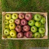 entrega de frutas no trabalho orçamento Anália Franco