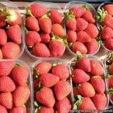 fornecedor de frutas