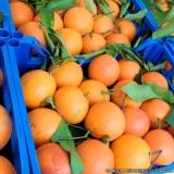 fornecedores de frutas frescas Casa Verde
